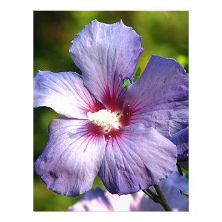 Rosa de la púrpura azul del hibisco de Sharon