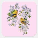 Rosa de los Goldfinches y de los flores Colcomanias Cuadradases