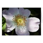 Rosa de perro - notelet/tarjeta en blanco
