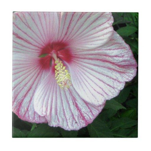 Rosa de Sharon - hibisco Azulejo Cuadrado Pequeño
