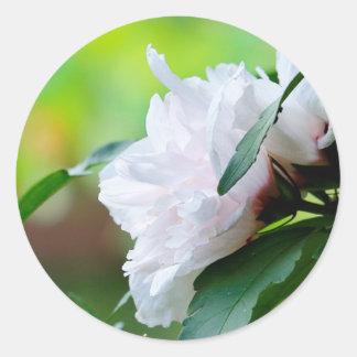 Rosa de Sharon Pegatina Redonda