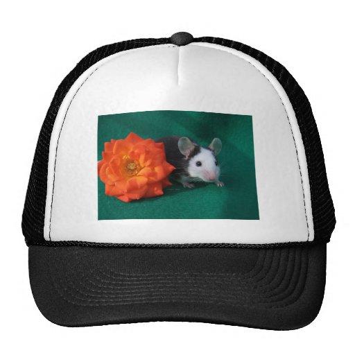 Rosa de té blanco negro del ratón y del naranja gorros