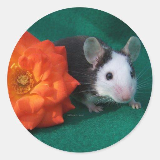 Rosa de té blanco negro del ratón y del naranja pegatina redonda