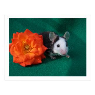 Rosa de té blanco negro del ratón y del naranja postales