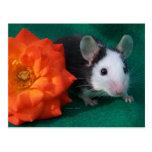 Rosa de té blanco negro del ratón y del naranja postal