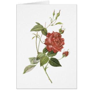 rosa de té (cruenta indica de Rosa) por Redouté Tarjeta De Felicitación