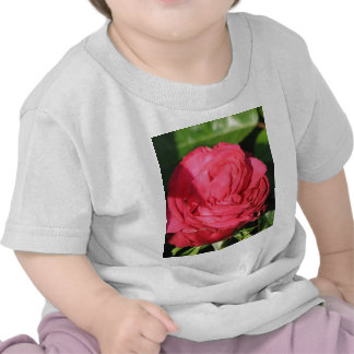 Rosa de té de Srta. Todo-americano Beauty Hybrid Camisetas