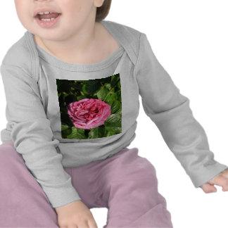 Rosa de té híbrido de la herencia 027 camiseta