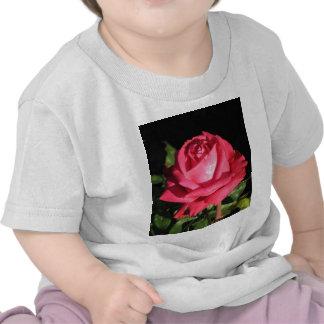 Rosa de té híbrido de Peter Frankenfeld 001 Camisetas