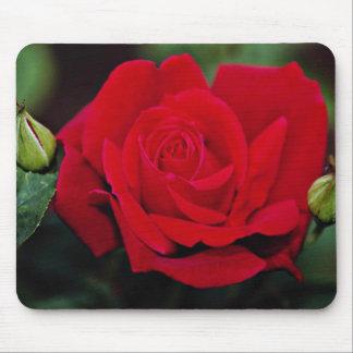 """Rosa de té híbrido flores blancas imperiales de """"C Alfombrillas De Ratón"""