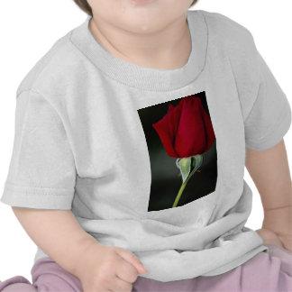 Rosa de té híbrido hermoso 'Chrysler Imperial Camisetas