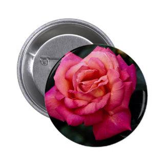 Rosa de té híbrido hermoso 'Cloud fragante Pin