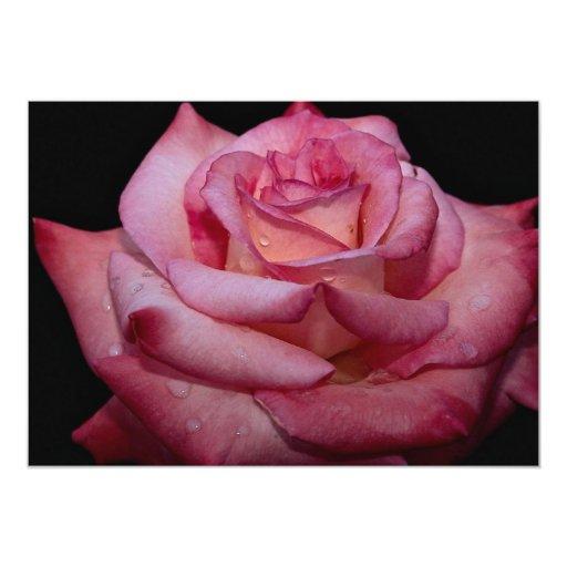 """Rosa de té híbrido hermoso 'Elegance escarpado Invitación 5"""" X 7"""""""