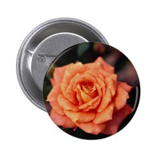Rosa de té híbrido hermoso pin