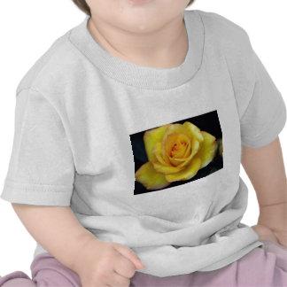 Rosa de té híbrido hermoso camiseta