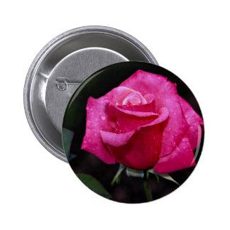 Rosa de té híbrido hermoso 'primer Prize Pin