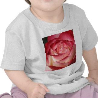 Rosa de té híbrido camisetas