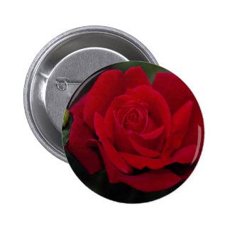 Rosa de té híbrido precioso 'Chrysler Imperial Pins