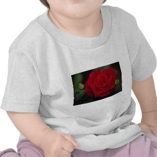 Rosa de té híbrido precioso 'Chrysler Imperial Camiseta