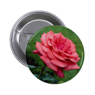 Rosa de té híbrido precioso 'Cloud fragante Pins