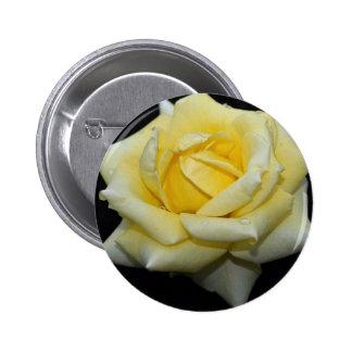 Rosa de té híbrido precioso 'Helmut Schmidt Pin