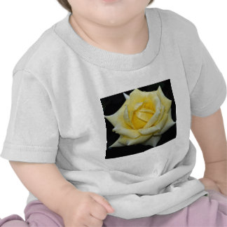 Rosa de té híbrido precioso 'Helmut Schmidt Camisetas