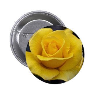 Rosa de té híbrido precioso pins