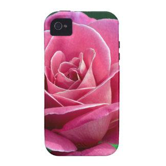 Rosa de té híbrido rosado iPhone 4 carcasas