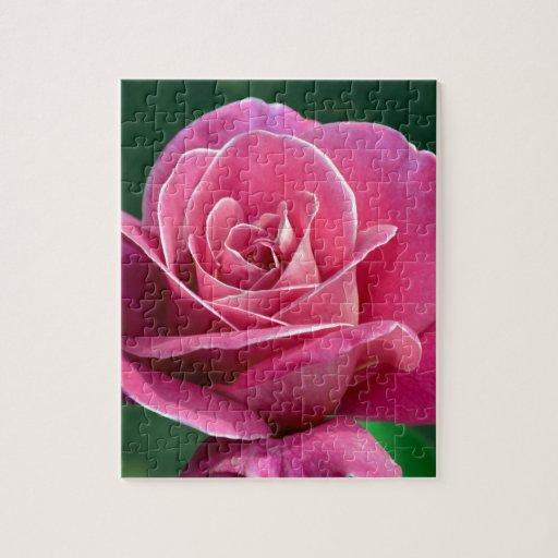 Rosa de té híbrido rosado puzzles