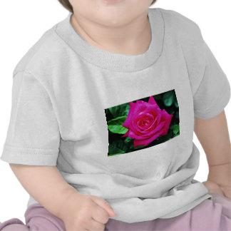 "Rosa de té híbrido ""Srta. Todo-americano Beauty"" f Camiseta"