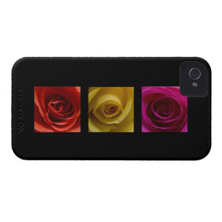 Rosa del amarillo anaranjado de los rosas del iPhone 4 protector