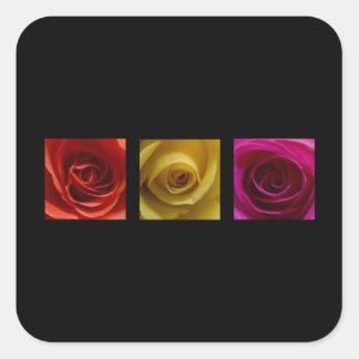 Rosa del amarillo anaranjado de los rosas del pegatina cuadrada