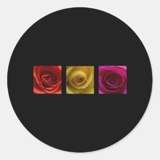 Rosa del amarillo anaranjado de los rosas del pegatina redonda