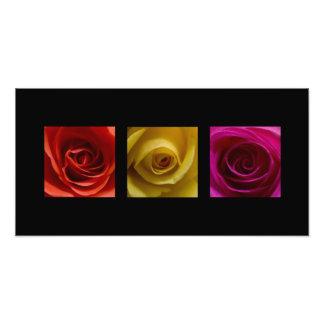Rosa del amarillo anaranjado de los rosas del tríp fotografías