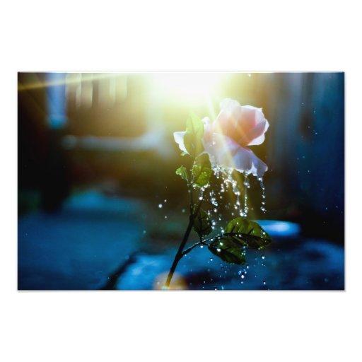 Rosa del chapoteo de la puesta del sol subió arte con fotos