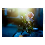 Rosa del chapoteo de la puesta del sol subió tarjeton