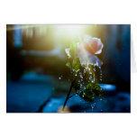 Rosa del chapoteo de la puesta del sol subió felicitación