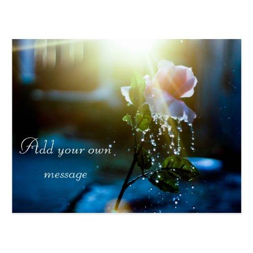 Rosa del chapoteo de la puesta del sol subió tarjeta postal