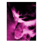 Rosa del contraste del gatito tarjetas postales