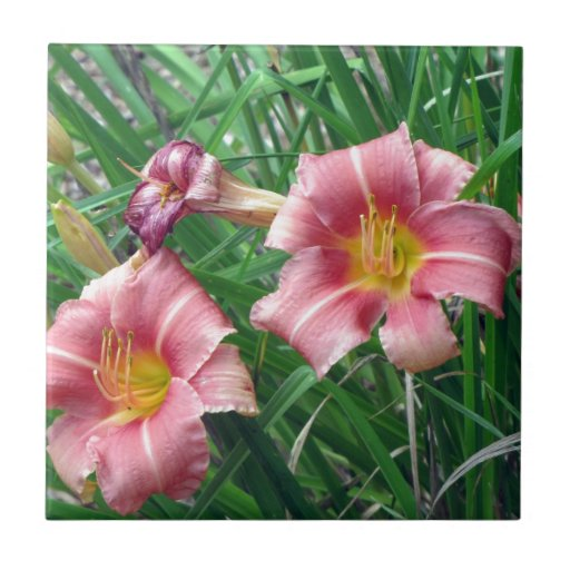 Rosa del melocotón del lirio de día tejas  ceramicas