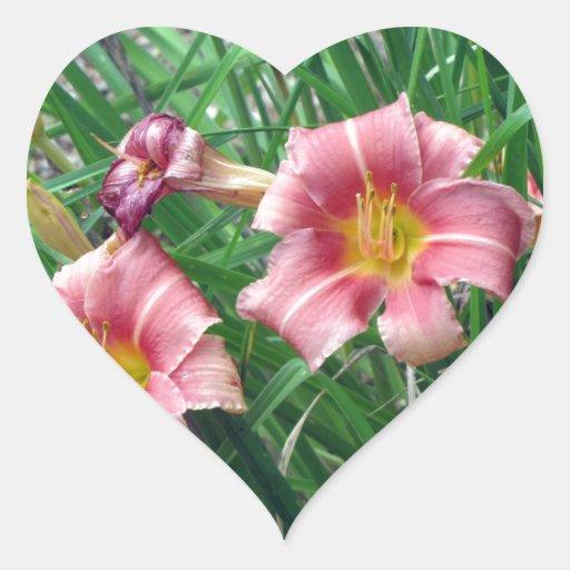 Rosa del melocotón del lirio de día pegatina en forma de corazón