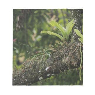 Rosa del pino, purpurea del Bletia, floreciendo en Libretas Para Notas