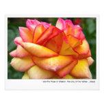 Rosa del poster de Sharon Fotos