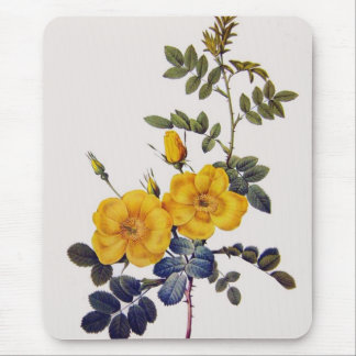 Rosa Eglanteria, P. J. Redoute, wild yellow roses Mouse Pad
