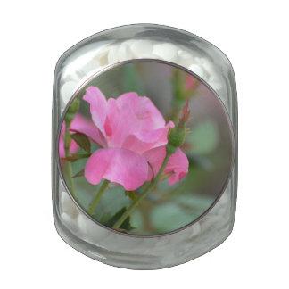 Rosa en colores pastel subió en Iraq Frascos De Cristal
