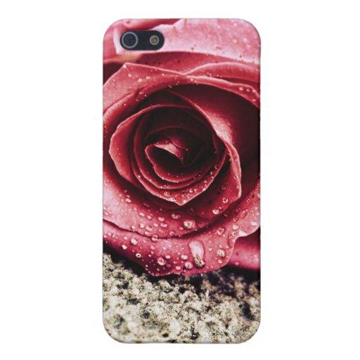 Rosa en la arena iPhone 5 carcasa