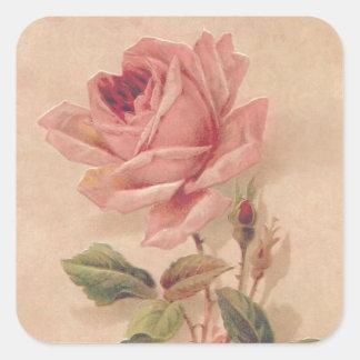 Rosa francés del Victorian subió Pegatina Cuadrada