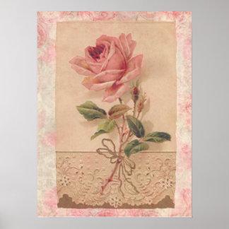 Rosa francés del Victorian subió Póster