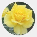 Rosa Friesia Pegatina Redonda