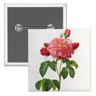 Rosa Gallica Aurelianensis Pin
